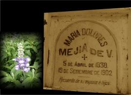 María Dolores Mejía De V.