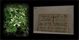 María J. de S y Juan de Dios Sanin E.